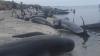 DEZASTRU NATURAL! Sute de balene au murit pe o plajă din Noua Zeelandă
