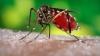 ANUNŢ DEVASTATOR despre virusul Zika! Ce NU se va întâmpla până în 2020