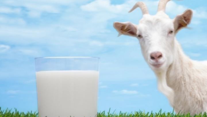 Face minuni pentru tine! Beneficiile laptelui de capra pentru sănătate