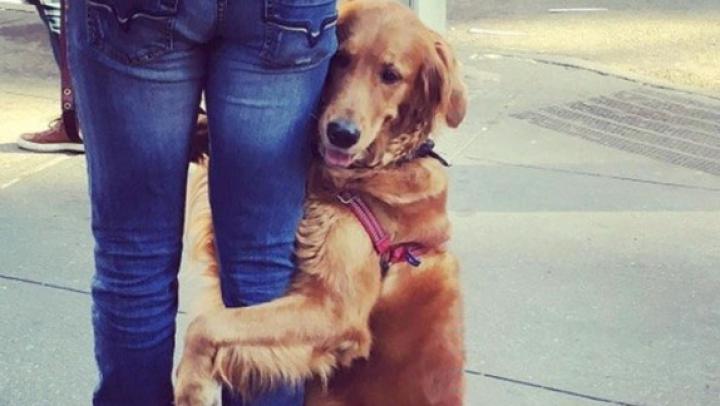 Emoţionant! O cățeluşă îmbrățișează pe oricine îi iese în cale (FOTO)