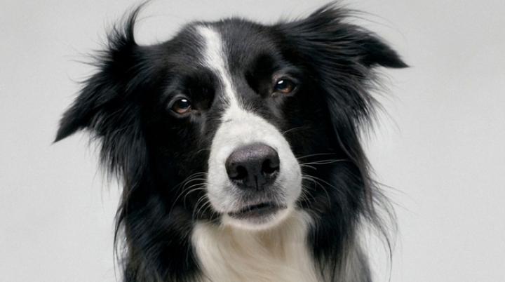 Cel mai tare câine din lume. Ar putea să le facă concurenţă celor mai buni atleţi din lume (VIDEO)