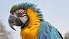 Papagali dependenți de droguri. Fenomenul face ravagii în India. Ce pericol prezintă păsările (VIDEO)