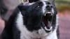 Haitele de câini vagabonzi au băgat spaima în locuitorii orașului Cahul. Străzile au fost INVADATE de maidanezi