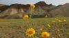 Spectacol INEDIT! Deşertul din California a prins culoare
