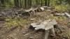 Pădurea din Micăuţi, tăiată FĂRĂ MILĂ! Câte hectare de arbori au fost defrişate