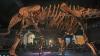 Bătrânul dinozaur Zarafasaura Oceanis nu va mai fi vândut la licitaţie. Care este MOTIVUL