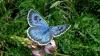 Un britanic a fost declarat VINOVAT pentru uciderea a doi fluturi dintr-o specie rară