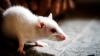 Un avion din Marea Britanie a fost reținut la sol din cauza unui şoarece