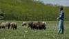 Mioriţa din Moldova. Un cioban din Cahul a fost omorât în 2004. Criminalul a povestit totul acum