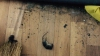 OTRAVĂ şi ŞOARECI MORŢI printre jucăriile copiilor la grădiniţa nr. 16 din Capitală. Ce nereguli a mai depistat CSPC (FOTO)