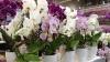 Cum se îngrijesc orhideele. Trucuri de luat în calcul