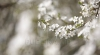 Primăvara își intră în drepturi! Se anunţă temperaturi de până la 18 grade