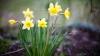 Cum va fi vremea de Ziua Internaţională a Femeii şi ce spun sinopticienii privind meteo în luna martie
