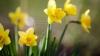 METEO 31 martie: Vreme frumoasă şi temperaturi generoase în ultima zi din această lună