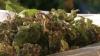 Leurda şi urzica, o sursă de sănătate. Ce spun moldovenii şi cât costă aceste bunătăţi la Piaţa Centrală