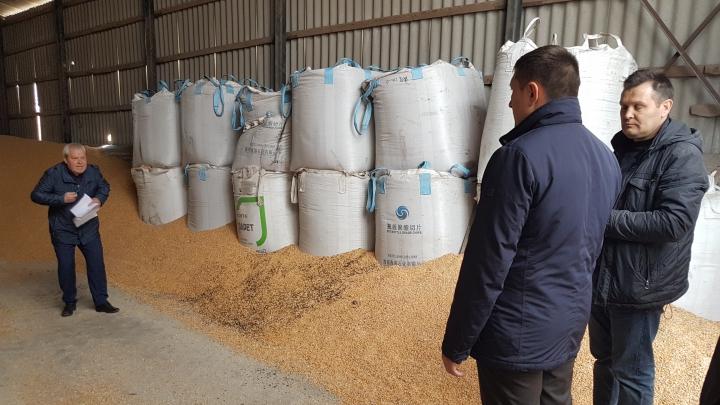 AVERTISMENTUL Ministerului Agriculturii: Fiți atenți când cumpărați semințe de porumb (FOTO)