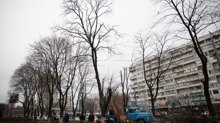 Copaci tăiaţi în Capitală. Cum sunt selectaţi arborii care vor fi defrişaţi (FOTOREPORT)