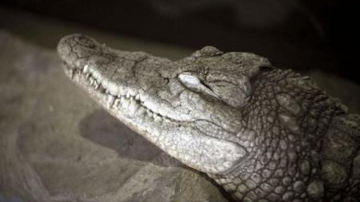 CRUZIME FĂRĂ MARGINI! Un crocodil de la un parc zoo a fost omorât cu pietre de vizitatori