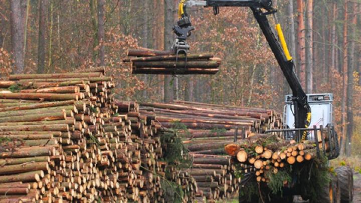 Ţara care nu mai acceptă tăierea nici măcăr a unui copac