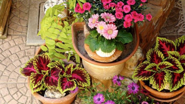 Ce să faci cu plantele din ghiveci dacă pleci de acasă o perioadă și nu le mai poți uda
