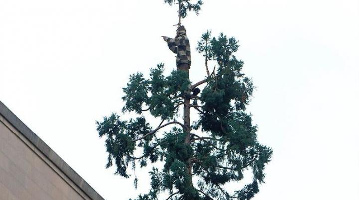 CULMEA PROSTIEI: A refuzat să coboare dintr-un copac, cerând un elicopter şi un crenvurst în aluat (FOTO)