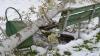 Grădina Botanică, clipe de TRAGEDIE ECOLOGICĂ. Ce pierderi s-au înregistrat în urma ninsorii (GALERIE FOTO)