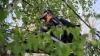 A patra zi de MOBILIZARE GENERALĂ! Cum au decurs lucrările de salubrizare a Capitalei (FOTO/VIDEO)