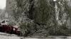 Tot mai mulți copaci prabușiti în Chișinău. Imaginile primite de la cititori (FOTO)