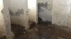 Şcoli fără apă şi cu toaleta în curte. Fiecare a treia şcoală din ţară NU corespunde normelor de igienă