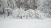 Şapte oameni AU MURIT şi peste 2.500 de copaci au căzut din cauza zăpezii. PROBLEME în toată Europa