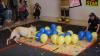 RECORD incredibil stabilit de un câine! Patrupedul a spart o sută de baloane în mai puţin de 40 de secunde (VIDEO)