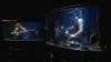SPECTACULOS! O trupă de artiști cântă în acvarii la instrumente improvizate