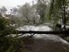 MARE DEZASTRU în Capitală! Tot mai mulţi copaci se rup (VIDEO)