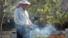 Mii de familii de albine nu au supravieţuit iernii. Care sunt cauzele