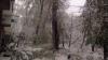 Chișinăul PARALIZAT COMPLET! 2.000 de copaci prăbușiți în Capitală