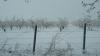 Recolta, COMPROMISĂ de ninsori abundente. Premierul a cerut o evaluare urgentă a PAGUBELOR URIAŞE