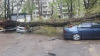 IMAGINI DE GROAZĂ! Un copac S-A PRĂBUŞIT peste mai multe maşini parcate într-o curte din Capitală (FOTO)