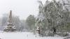 Teiul lui Eminescu, în PERICOL să se rupă. Un NUMĂR IMENS de arbori sunt doborâți la pământ din cauza zăpezii depuse