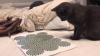 Ce se întâmplă când pui o pisică în faţa unei iluzii optice. Momentul a devenit VIRAL
