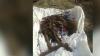 MACABRU. Oseminte umane descoperite în comuna Vatra (VIDEO)