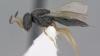 """Savanţii au descoperit 15 noi specii de viespi """"polimorfe"""", iar stilul de viaţă al acestora este înfricoşător"""