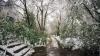 Flori îngheţate, copaci doborâţi şi poteci blocate de crengi. Parcurile din Capitală, într-o STARE DEZASTRUOASĂ