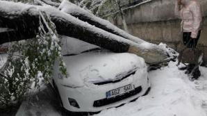 PRĂPĂD peste mașinile din Capitală! Mai multe automobile au fost strivite de copaci (GALERIE FOTO)