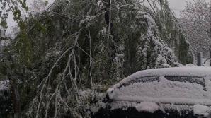 NINSORILE AU FĂCUT RAVAGII în Capitală. Copaci la pamant și trafic îngreunat (FOTO/VIDEO)