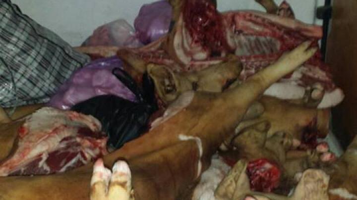 Te ia groaza! În ce condiţii transporta un bărbat 800 de kg de carne de porc (FOTO)