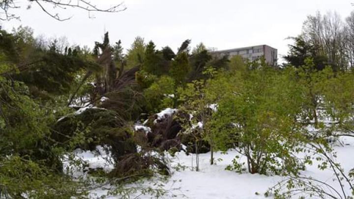 Principatul Monaco oferă 100.000 de euro pentru restabilirea Grădinii Botanice după intemperiile din aprilie 2017