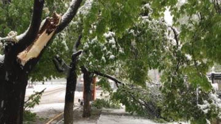 NINSOAREA DIN APRILIE FACE RAVAGII. Copacii rupţi sub greutatea zăpezii au blocat străzile din Capitală (FOTO)