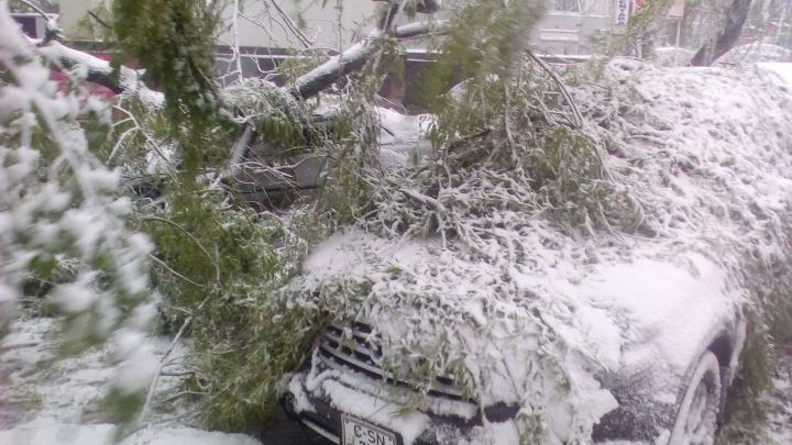 VREMEA REA face prăpăd în Capitală. Copaci căzuți, fire electrice rupte, trafic blocat (FOTO)