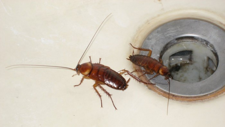 Cea mai bună metodă pentru a scăpa definitiv de gândacii de bucătărie
