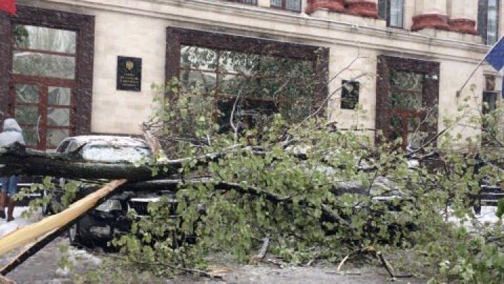 VREME REA în toată ţara. Încă un copac a căzut în fața Curții de Conturi (FOTO)